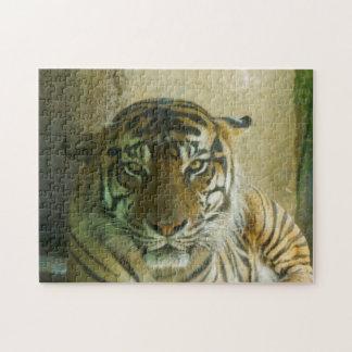 Sumatran Tiger Puzzle