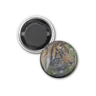 Sumatran Tiger, Wild Animal, Big Cat-Lover Art Magnet