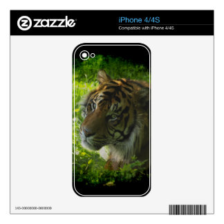 Sumatran Tiger Wild Animal Big Cat-Lover iPhone 4S Skin