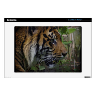 "Sumatran Tiger Wild Animal Big Cat-Lover Decals For 13"" Laptops"