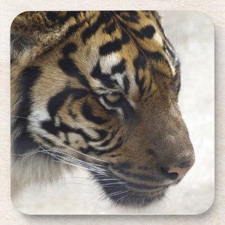 Sumatran Tiger Wild Tiger Wildlife Art Coaster