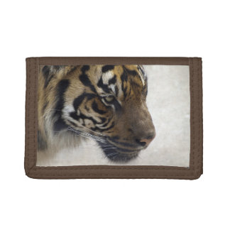 Sumatran Tiger Wild Tiger Wildlife Art Trifold Wallets