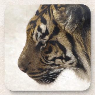 Sumatran Tiger Wild Tiger Wildlife Photo Beverage Coaster