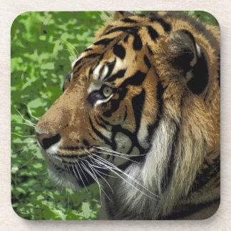 Sumatran Tiger Wildlife Big Cat-Lover Coaster