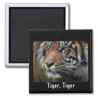 Sumatran Tiger Wildlife Big Cat-Lover Magnet