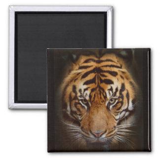 Sumatran Tiger Wildlife Big Cat Lover Photo Magnet