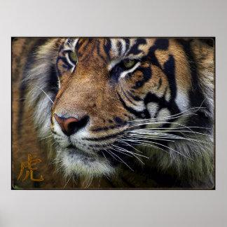 Sumatran Tiger Wildlife Big Cat-Lover Poster