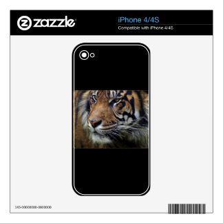 Sumatran Tiger Wildlife Big Cat-Lover Skins Decals For iPhone 4
