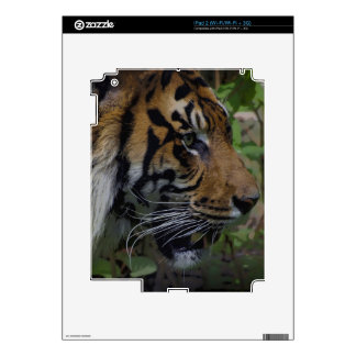 Sumatran Tiger Wildlife Big Cat-Lover Skins iPad 2 Decals