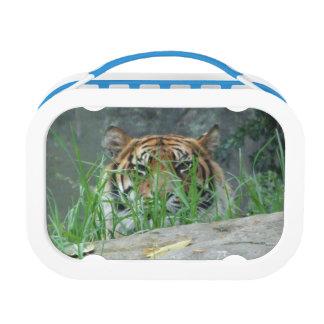 Sumatran Tiger Yubo Lunch Box