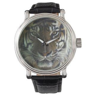 Sumatran Tigress Wristwatch