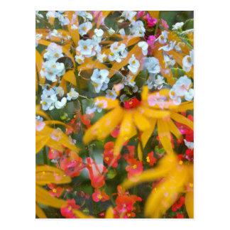 Sumer Flowers Postcard