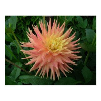 Summar Bloom Postcard