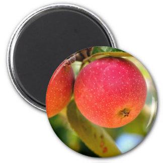 Summer Apples Magnet