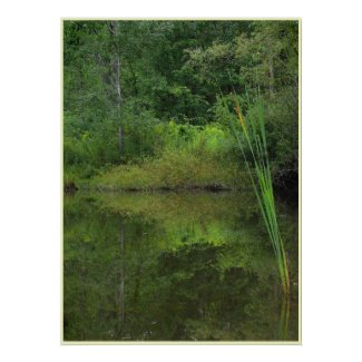 Summer at the Pond print
