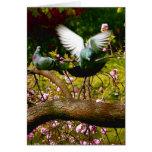 Summer Birds II Card