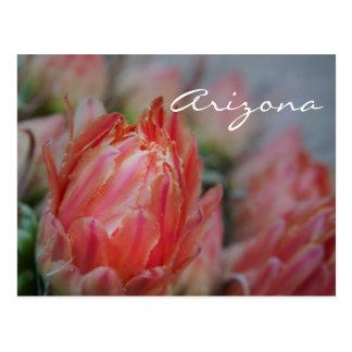Summer blooms from Arizona Postcard