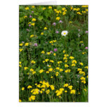 Summer Blooms Greeting Cards