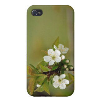 Summer Blossom iPhone Case iPhone 4/4S Cases