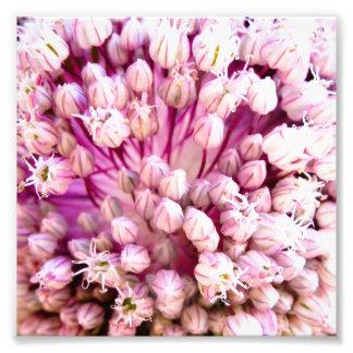 Summer Buds Flower Print Art Photo