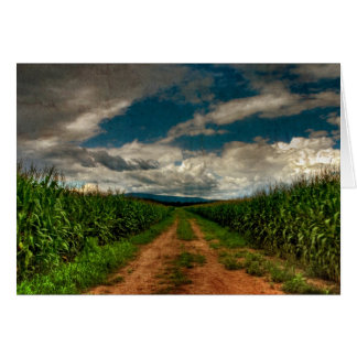 Summer Cornfield Blank Notecard Stationery Note Card