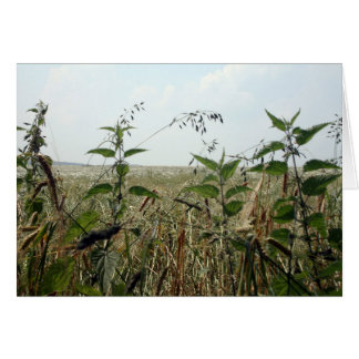 Summer Countryside Fields & Skies Card