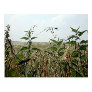 Summer Countryside Fields & Skies Postcard