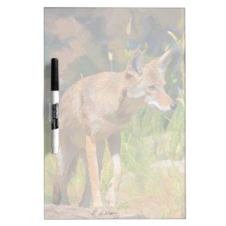 Summer Coyote Wildlife Painting Dry Erase Board