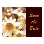 Summer Daisies Save the Date Postcard