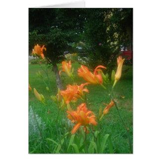 Summer daylilies card
