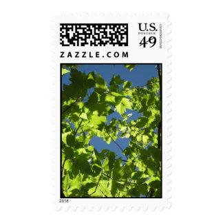 Summer Days (2) Postage Stamps