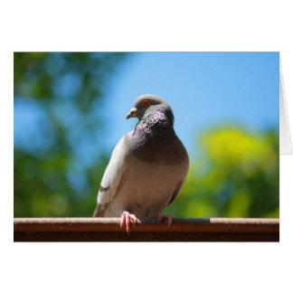 summer dove card