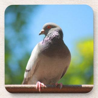 summer dove drink coaster