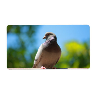 summer dove label