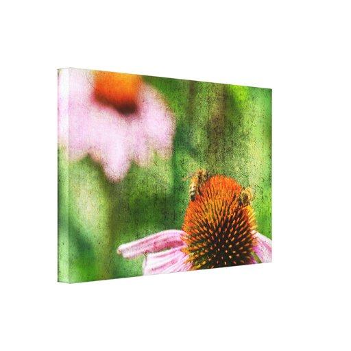 Summer Echinacea Canvas Print