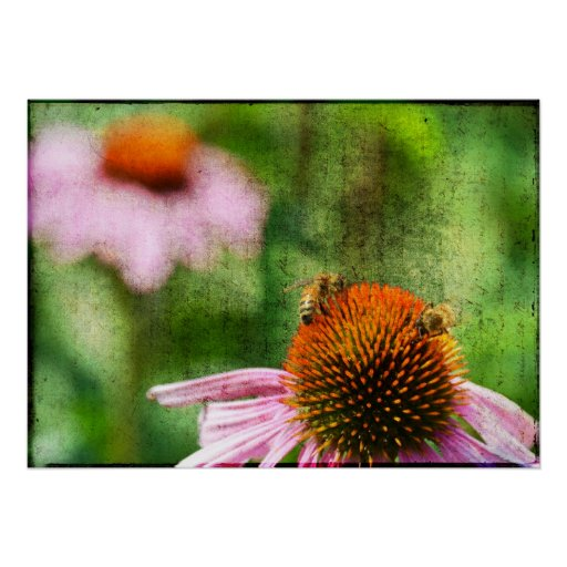 Summer Echinacea Poster
