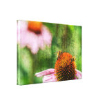 Summer Echinacea Stretched Canvas Print