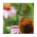 Summer Echinacea Tile
