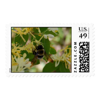 Summer Feast Stamp