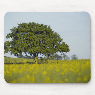 Summer Field and Tree Mouse Pad