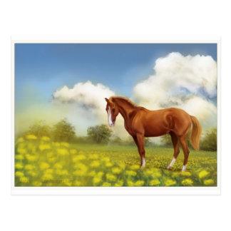 summer field horse postcard