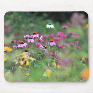 Summer, Field of Coneflowers Mouse Pad