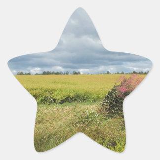 Summer Field Star Sticker