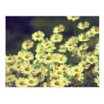 Summer field with white daisy postcard
