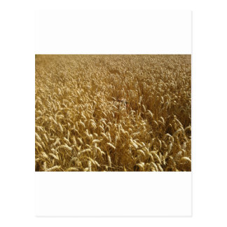 summer fields postcard