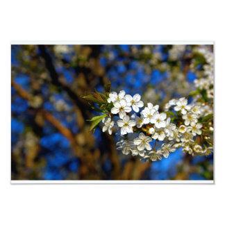 Summer Flower Card