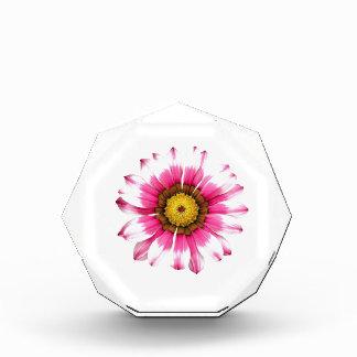 Summer Flower Images Award