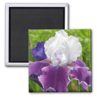 Summer Flower - Purple & White Iris Magnet