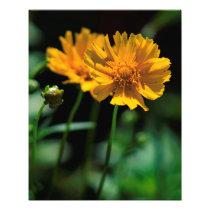 Summer Flowers 2 Photo Print