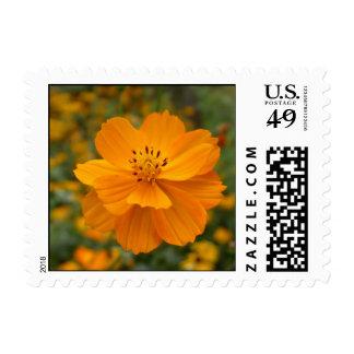 summer flowers - calendula stamps